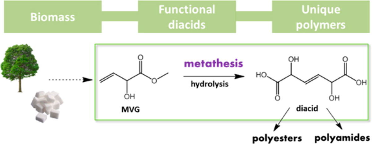 Synthesis of Novel Renewable Polyesters and Polyamides with Olefin Metathesis